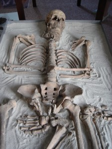 Squelette -Brehna